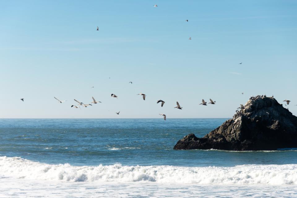 san francisco ocean beach blue pacific birds pelicans flying birds rock water surf