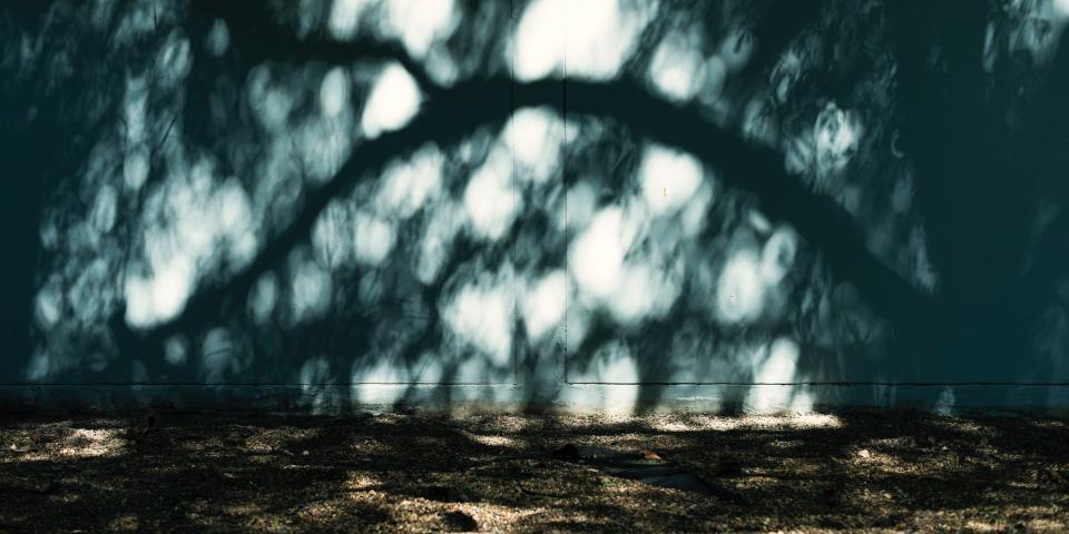 concrete sunlight wall tree shadow