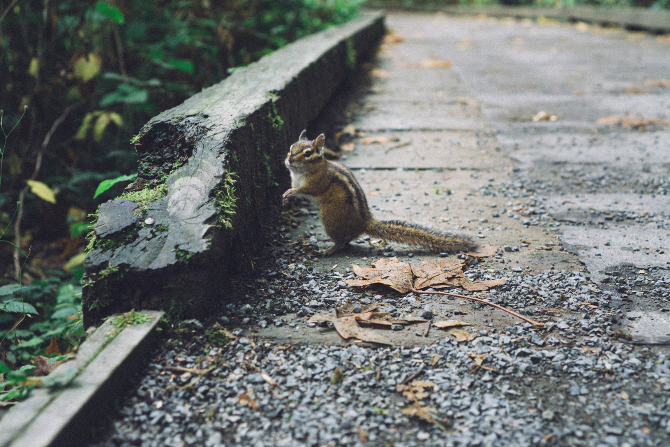 Squirrel nature seeds green canada British Columbia food road pavement animal wildlife outdoors