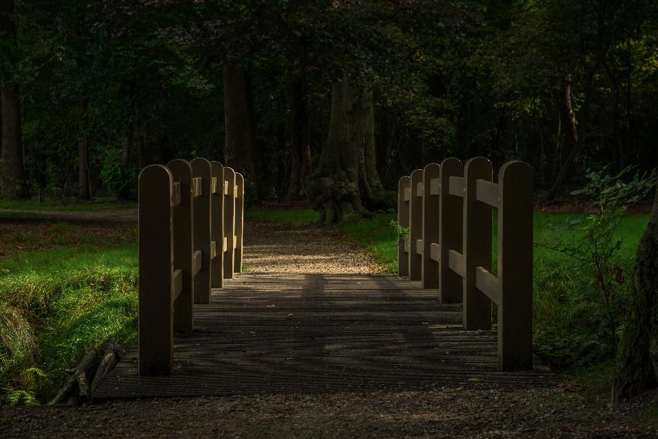 Bridge park autum wood grass nature outdoors dark night evening lights path trail walkway trees