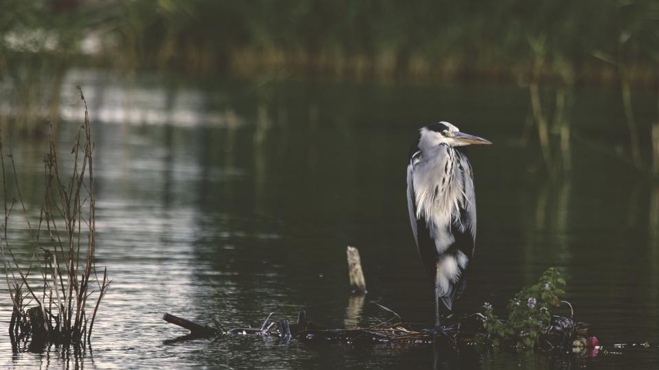 bird beak feather animal fly water river lake