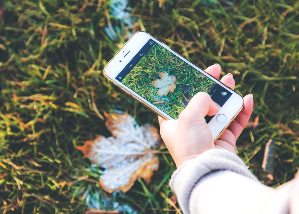 iphone camera picture photography photographer smartphone cell phone leaves grass nature fall autumn