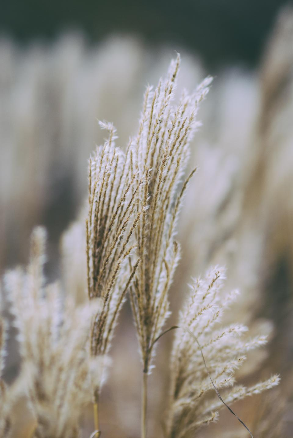 leaves plant field nature flower grass